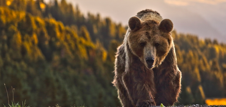 Exclusive tour at Arosa Bear sanctuary with Executive Assistant Manager Leonie Schefenacker